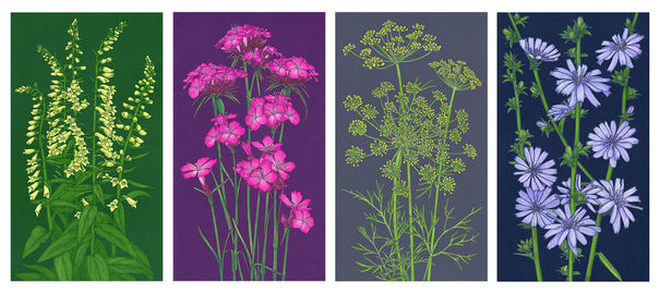 Gardens Illustrated Seed Packets