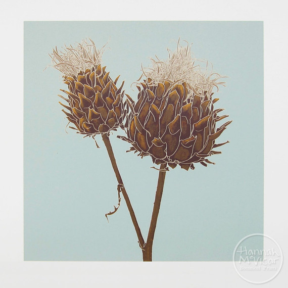 'Cardoon Seed Head'