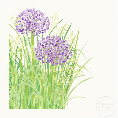 'Allium & Grasses'