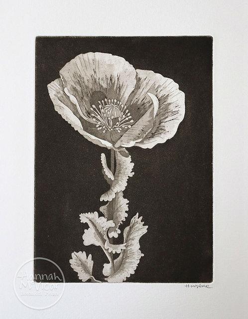 'Oriental Poppy'   aquatint