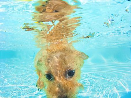 水中の表情