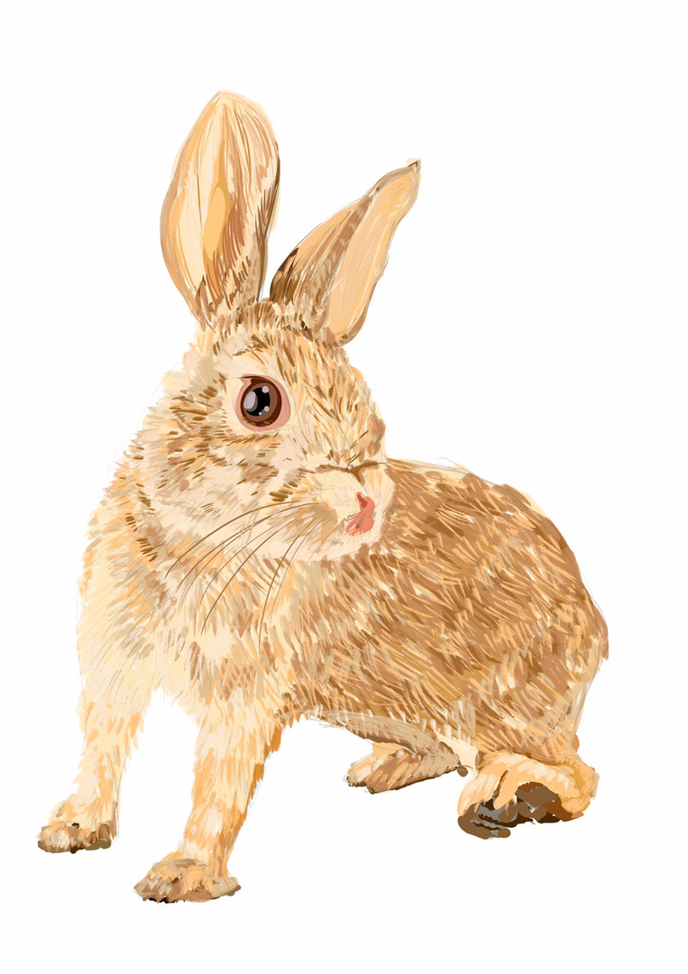 rabbit.jpeg