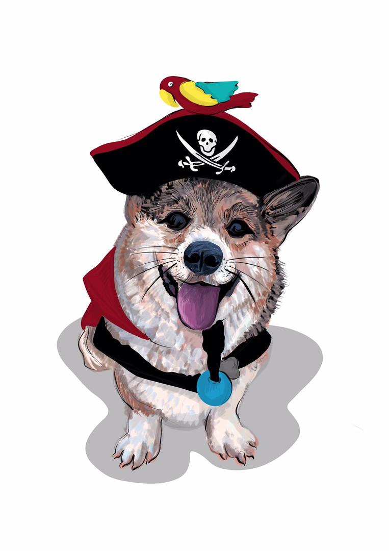 pirate corgi.jpeg