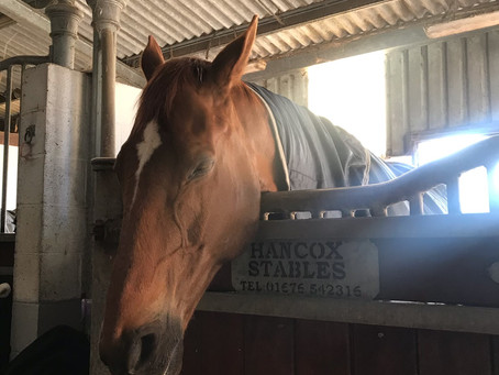 What's the normal temperature for a horse? Assessing the vital signs