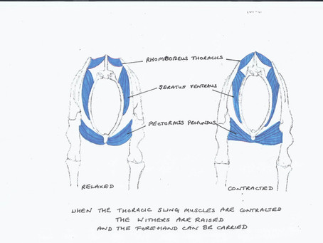 How do we create lift and impulsion?