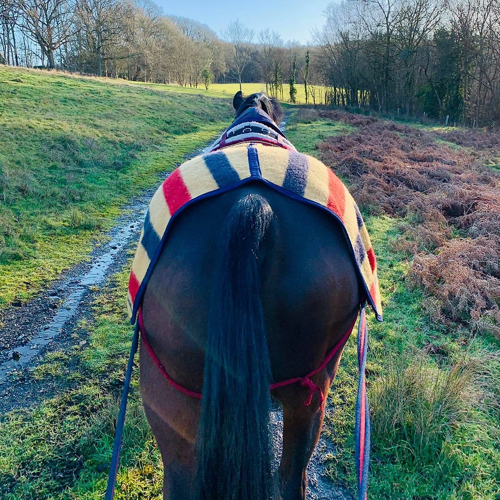 Back pain in horses, Rehabilitation exercise for horses, Pain relief for horses, Saddle fit ,My horse has kissing spine what should I do?, long reining