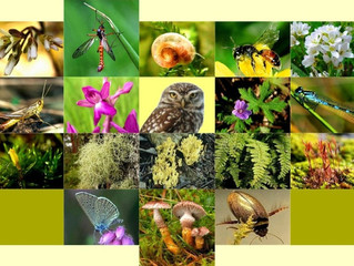 """Biodiversity, How to enhance it in your garden"""