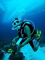 Dive Tree PADI 5스타 IDC
