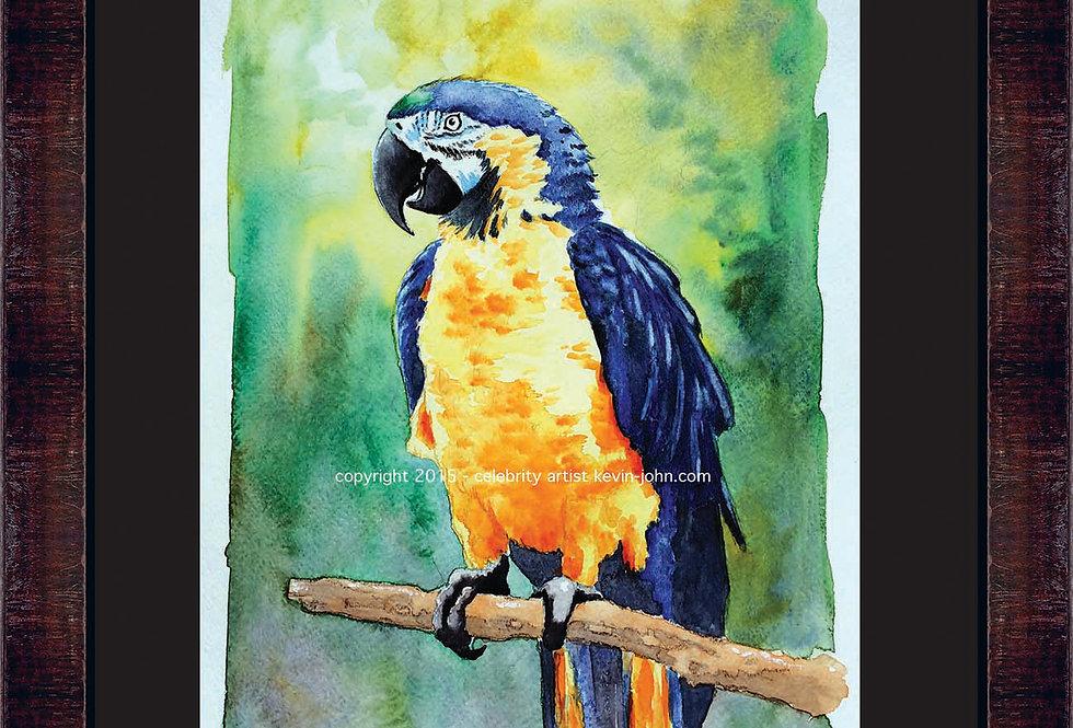 Paradise Parrot Framed Giclee