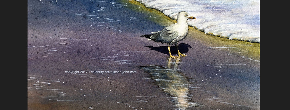 Wading Gull Matted Print