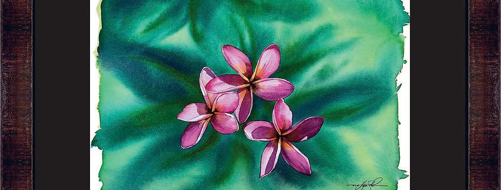 Hawaiian Plumeria Framed Giclee