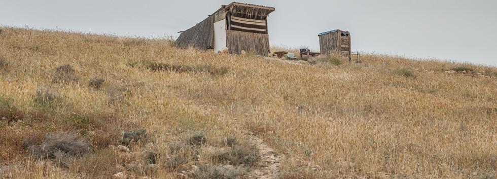 Scenes from the desert