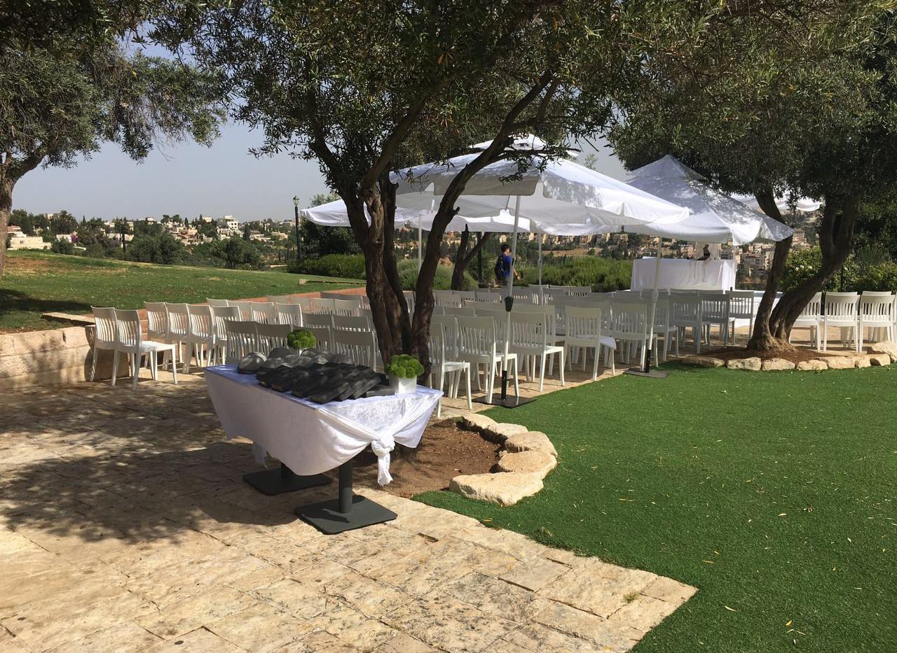 BM tefillah olive trees