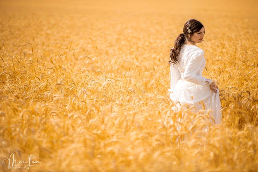 Bride in an Israeli wheat field