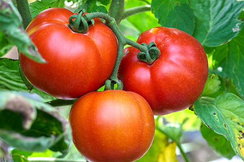 Conclusiones I Observatorio Europeo frut