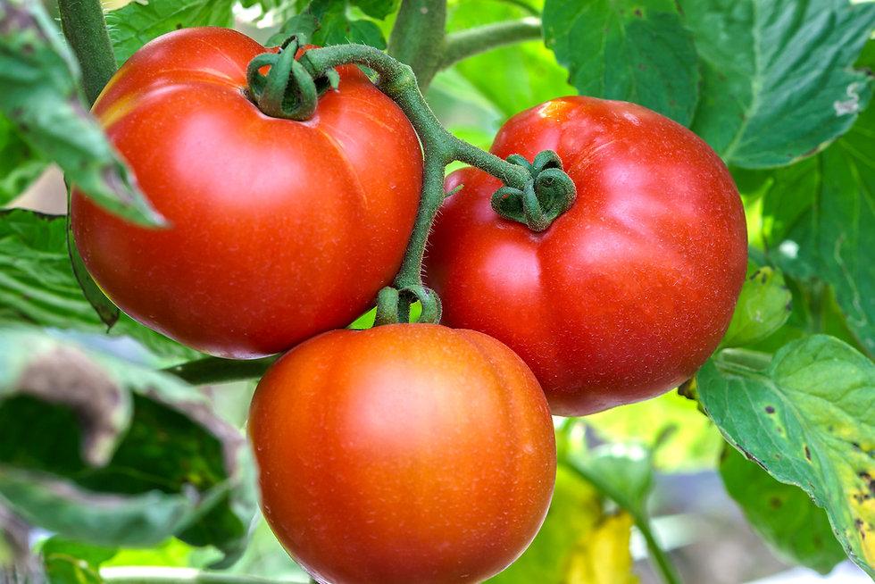 Conclusiones I Observatorio Europeo fruta y verdura (Actualidad) - GastroSpain