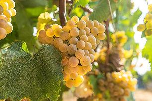 Portada (Mejores vinos Albariños) - GastroMadrid.jpg
