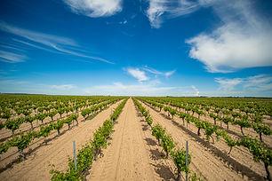 Pandora Bodegas y Viñedos (Mejores vinos blancos de Rueda) - GastroMadrid (16).jpg