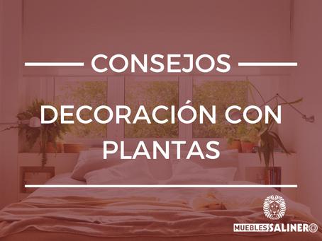 Consejos de decoración con plantas en pisos pequeños