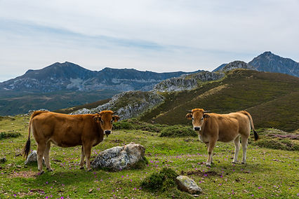 El Sentir de Braña - Mejores Carnicerías de España (Fresquera) - GastroSpain