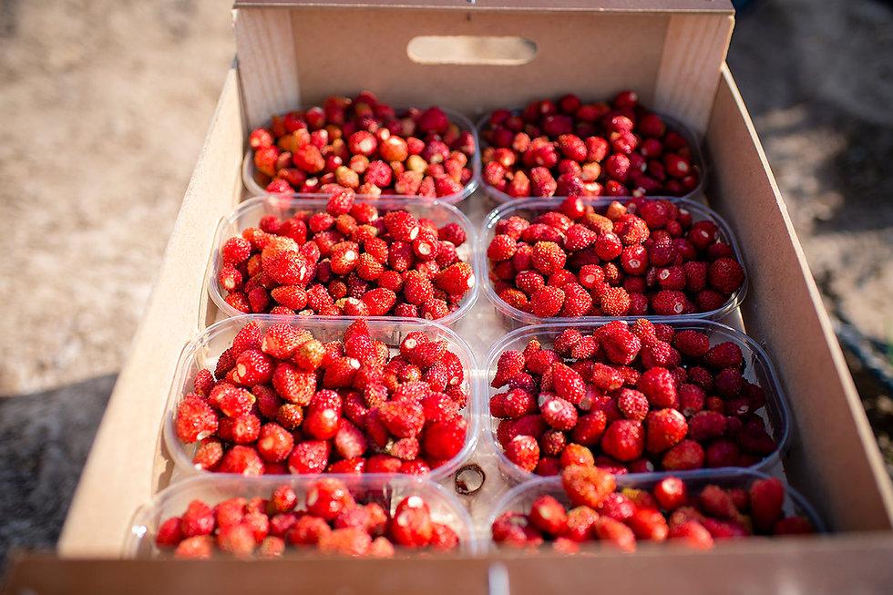 Fresas La Huerta de Aranjuez - Productos del mes Abril 2021 (Fresquera) - GastroSpain