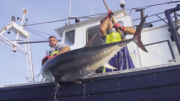 JC Mackintosh pesca sostenible MSC (Actualidad) - GastroSpain.jpg
