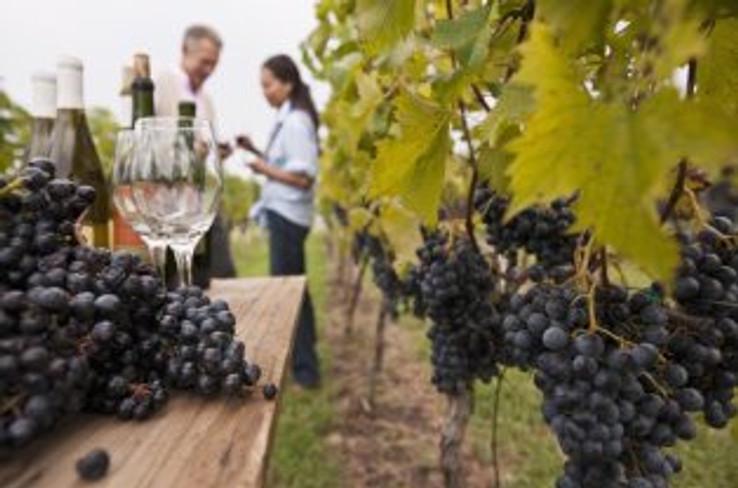 new-zealands-wine-trail-3-1