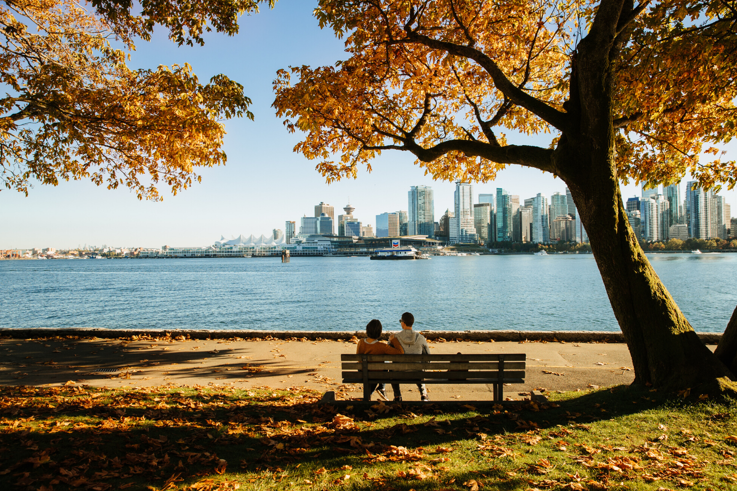 Couple taking in the skyline view from a bench in Stanley Park under trees in fall