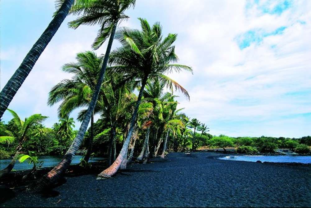 Palm trees on the Black Sand Beach, Hawaiian Islands, Hawaii, USA