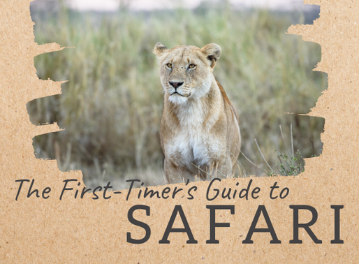 The First-Timer's Guide to Safari