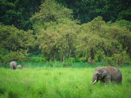 11 Unique Safari Experiences around the World