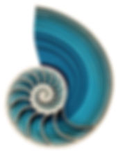 nautilus wall large.jpg