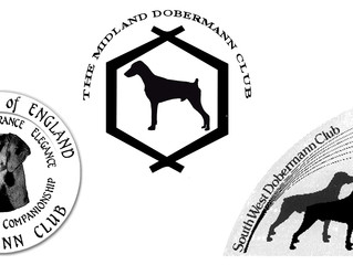 "South West Dobermann Club join the ""JSC"" party!"