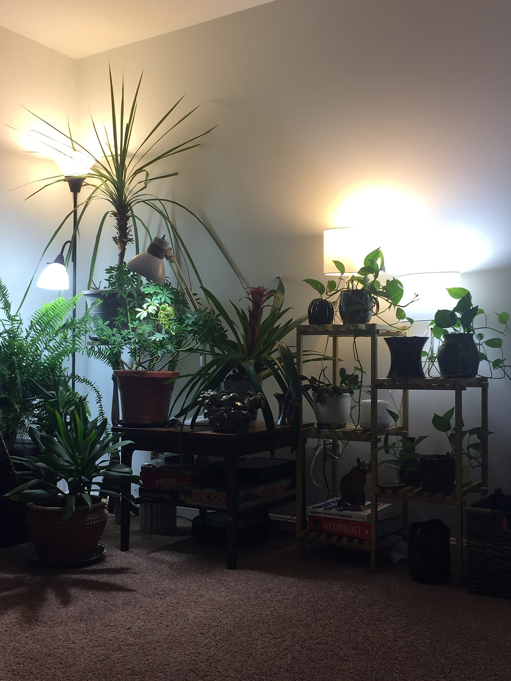 A plethora of house plants