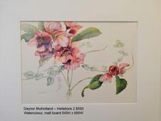Gaynor Mulholland – Hellebore 2 $550
