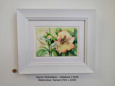 Gaynor Mulholland – Hellebore 3 $250