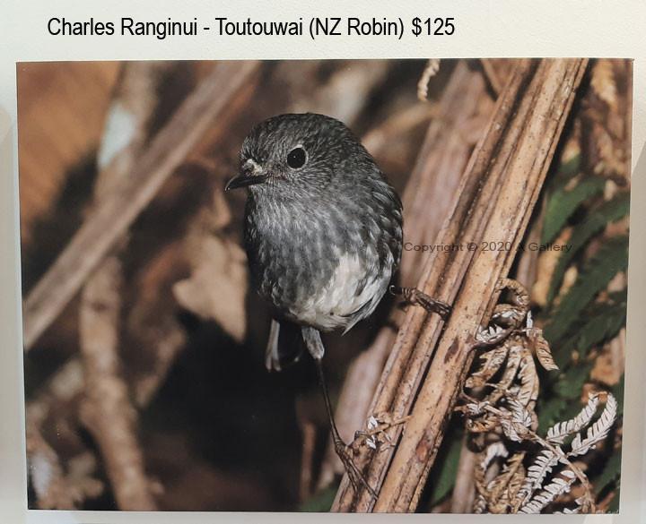 Charles Ranginui - Toutouwai (NZ Robin)