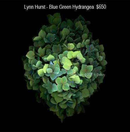Lynn Hurst - Blue Green Hydrangea  $650