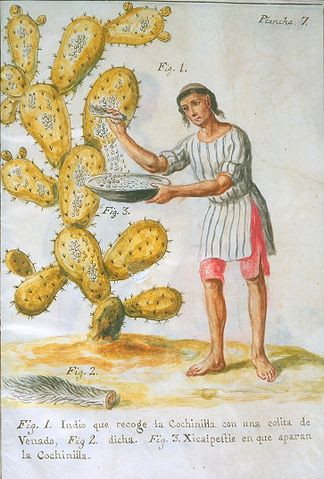 """A boy sweeps cochineal insects off of a cactus in this painting: """"Indian Collecting Cochineal with a Deer Tail"""" from Memoria sobre la naturaleza, cultivo, y beneficio de la grana (. . .). Colored pigment on vellum. Newberry Library: Vault Ayer MS 1031. 1777"""