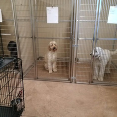 Groom Shop Kennels