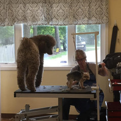 Beau the Supervisor