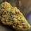 Thumbnail: ORANGE BUD