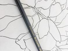 Blackwing sketch