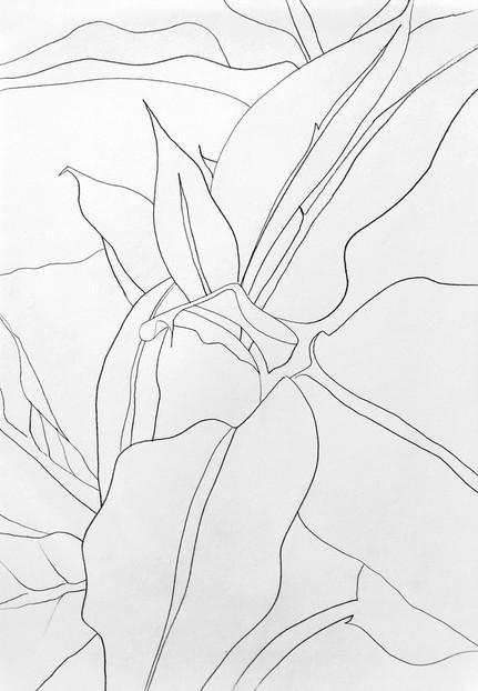 Plant flow 01, 2018