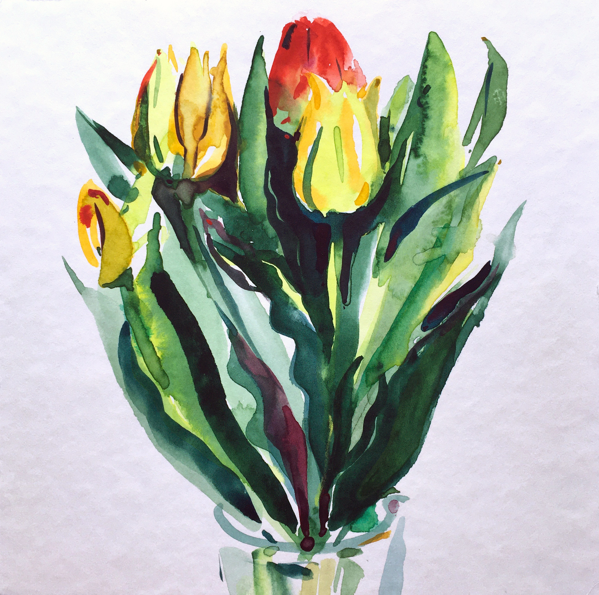 Tulips bunched