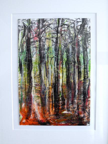 Birch wood glow