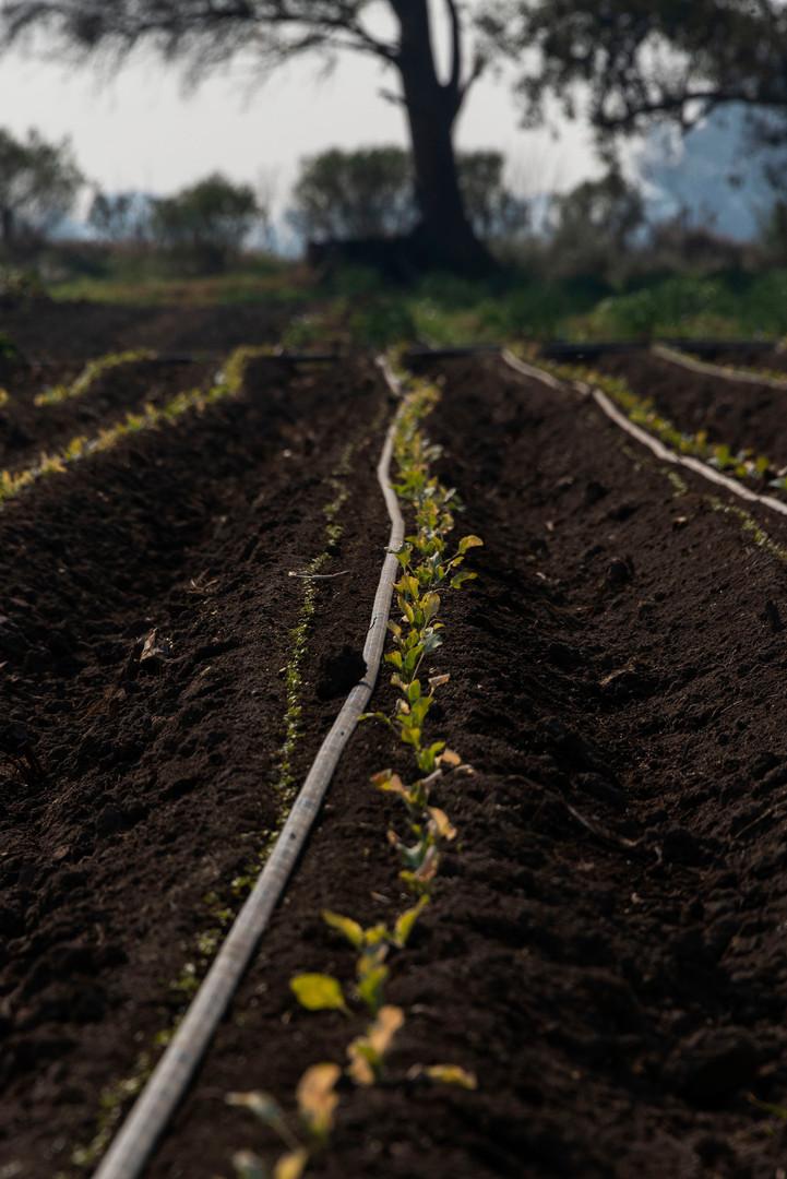 07_Agroecologia Magali Druscovich.jpg