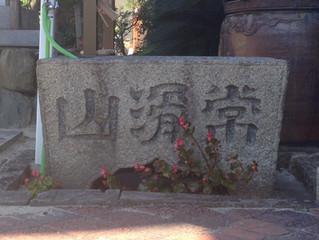 Bonsai at the graveyard - Tokoname