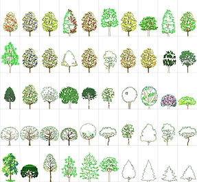 ARCHIOL_RESOURCES_TREES_06.jpg