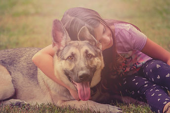 dog-3963308.jpg